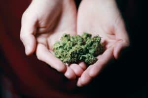 La chronique du mercredi : que dit la loi sur la détention de cannabis ?